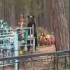 В Тынде на новом кладбище медведь разрыл могилу