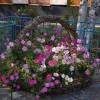 В столице БАМа стартовал конкурс «Лучший дизайн цветочной клумбы»