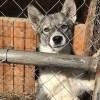 В Тынде начал работу пункт передержки животных