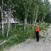Начался спил надломленных прошлогодним сентябрьским снегопадом деревьев
