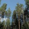 Ответственность за преступления в сфере лесопользования, пожарной безопасности в лесах