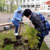 Сотрудники городской библиотеки приняли участие в озеленении Тынды